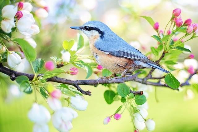 Spring Bird · Free photo on Pixabay (30478)