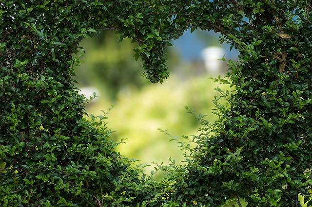 Heart Herzchen Love · Free photo on Pixabay (35939)