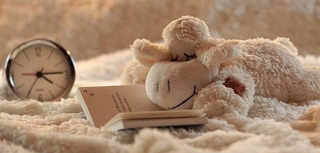 Still Life Lamb Stuffed Animal · Free photo on Pixabay (52065)