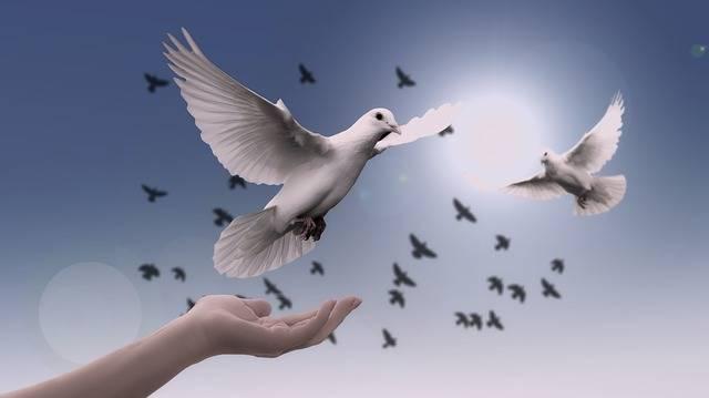 Dove Hand Trust · Free photo on Pixabay (56120)