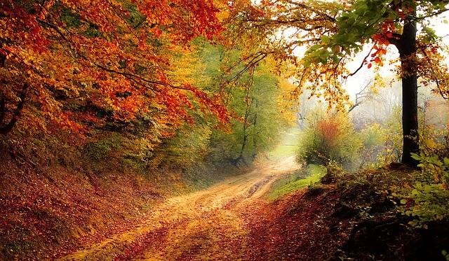 Road Forest Season · Free photo on Pixabay (101607)