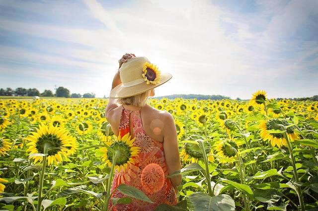 Sunflowers Field Woman · Free photo on Pixabay (107329)
