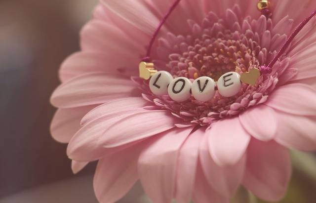 Love Bracelet Gerbera · Free photo on Pixabay (111010)