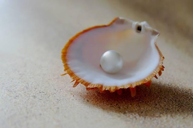 Shell The Beach Pearl · Free photo on Pixabay (118661)