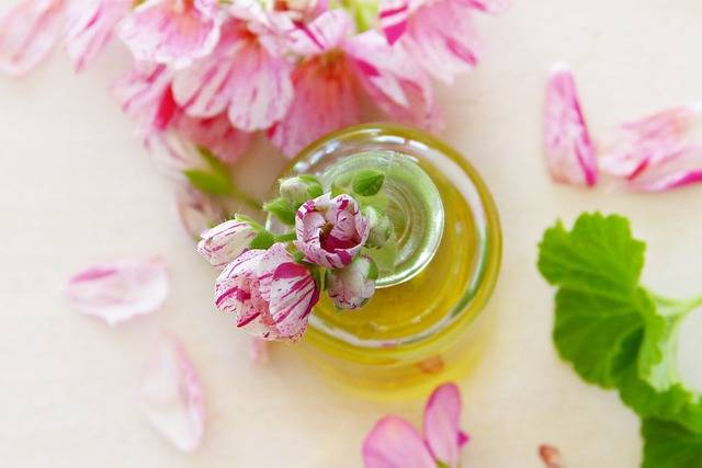 Oil Geranium Leaves · Free photo on Pixabay (143917)