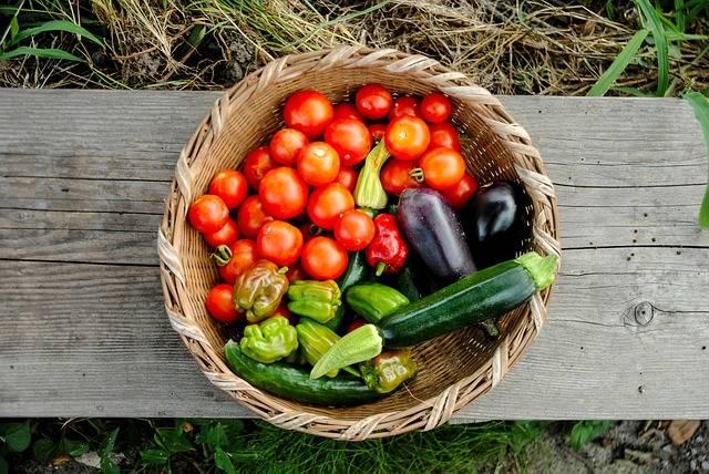 Harvest Tomato Pumpkin · Free photo on Pixabay (145282)