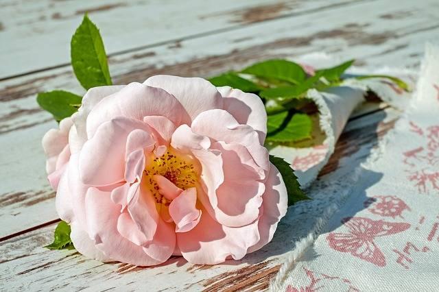 Rose Flower Blossom · Free photo on Pixabay (160608)