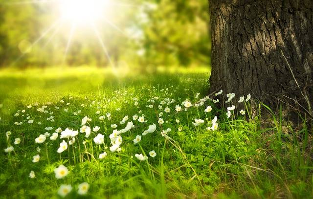 Spring Tree Flowers · Free photo on Pixabay (162572)