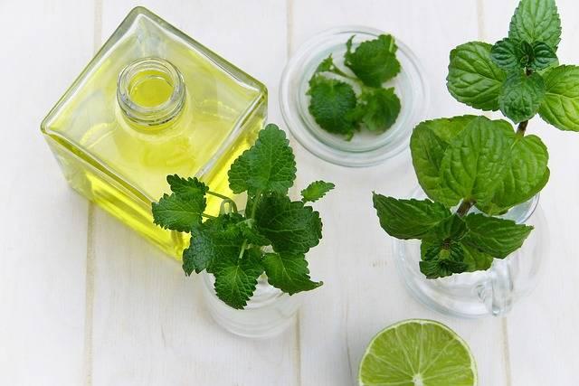 Leaf Mint Herb · Free photo on Pixabay (165357)