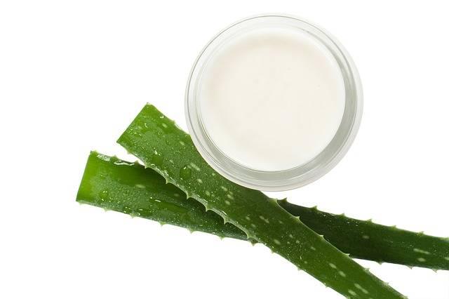 Cream Aloe Vera Beautician - Free photo on Pixabay (174976)