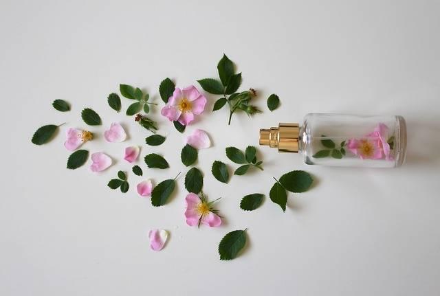 Scent Of Roses Perfume Rose - Free photo on Pixabay (186304)