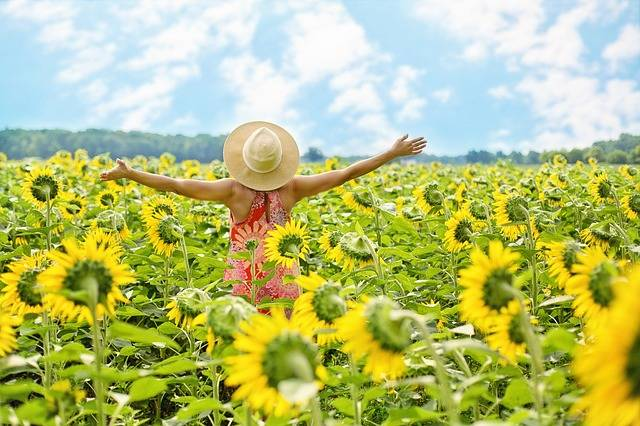 Sunflowers Field Woman - Free photo on Pixabay (198612)