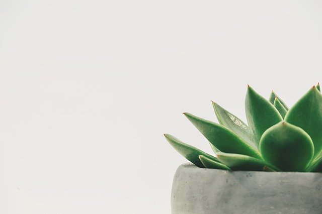 Plant Succulent Potted White - Free photo on Pixabay (282086)