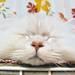 第1回:猫と育つと人が健康に?動物が人に与える影響 - 【ケアクル】