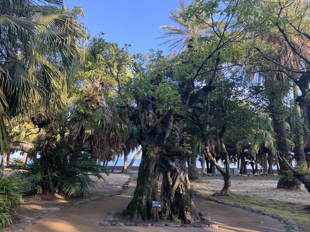 浜辺の木写真