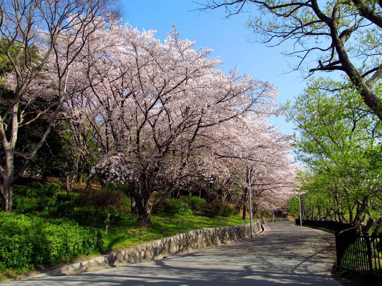 【早上景點】慢跑漫步皆相宜♪大阪人氣運動景點推薦