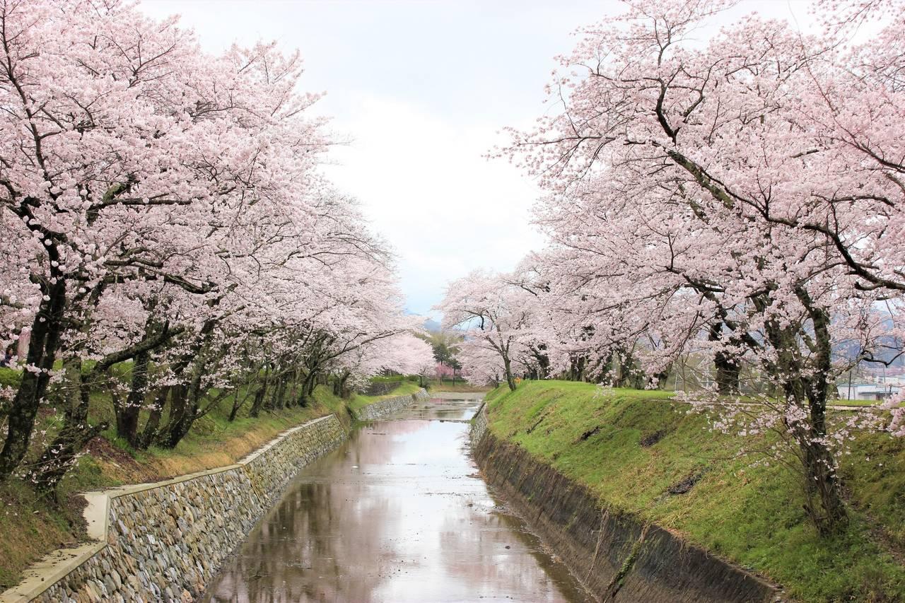 【京都】櫻花季系列1~到私房景點「七谷川柔和之道」賞櫻吧!