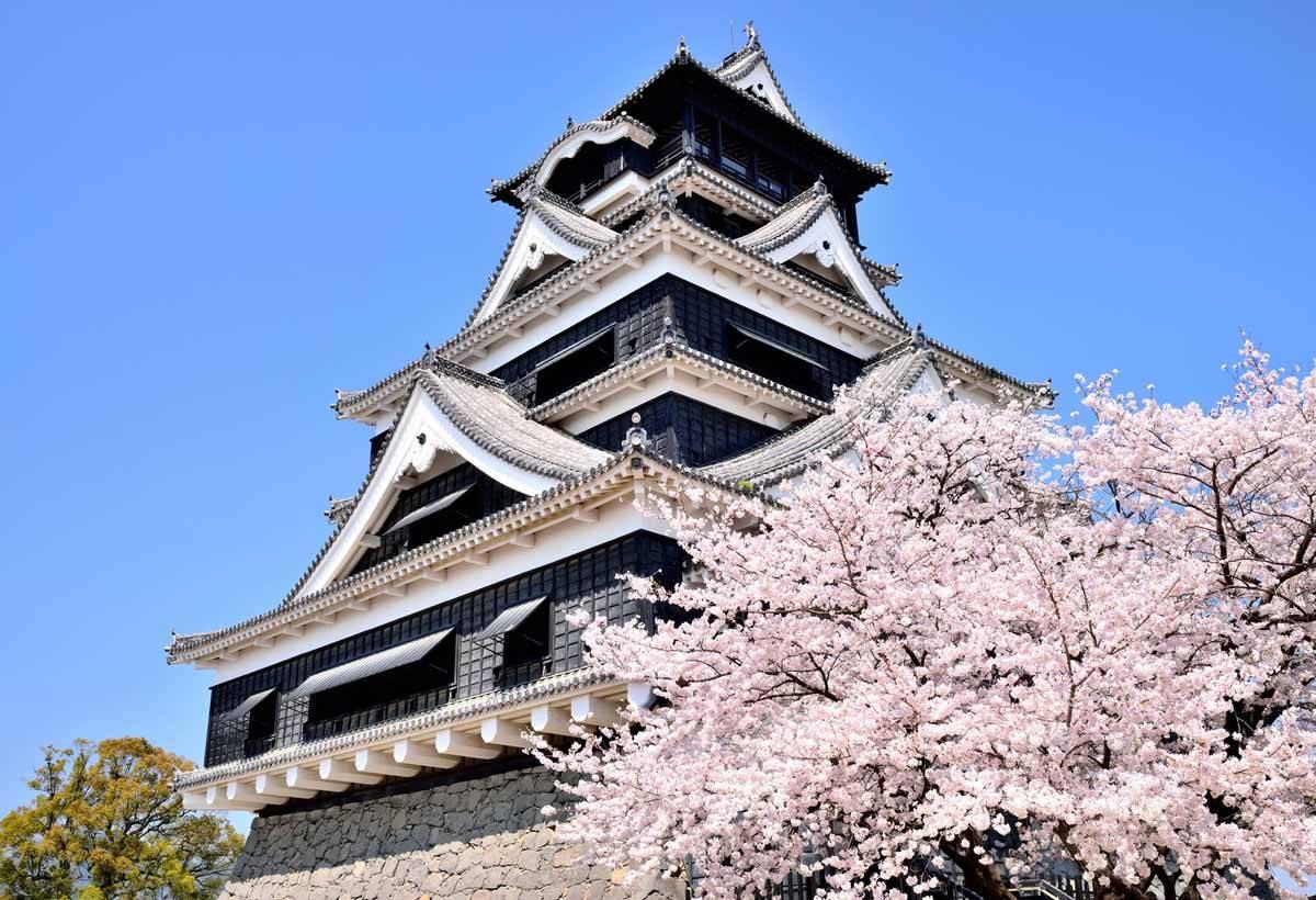 油菜花與櫻花等你來!冬天到九州賞櫻不怕沒花看【暢遊日本APP】