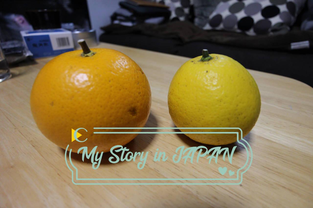 """【我的日本生活物語】你的橘子不是你的""""橘子""""!日本柑橘踩雷紀錄"""