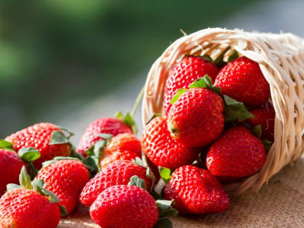 【日本47都道府縣的地方食材】從櫪乙女到晴空莓!櫪木縣值得驕傲的草莓與特產