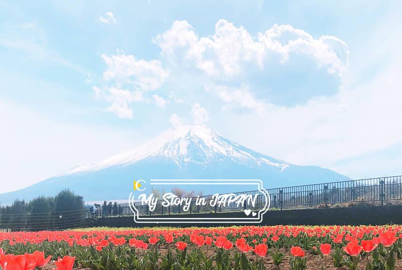 富士山一年四季都美麗 五月山中湖鬱金香季