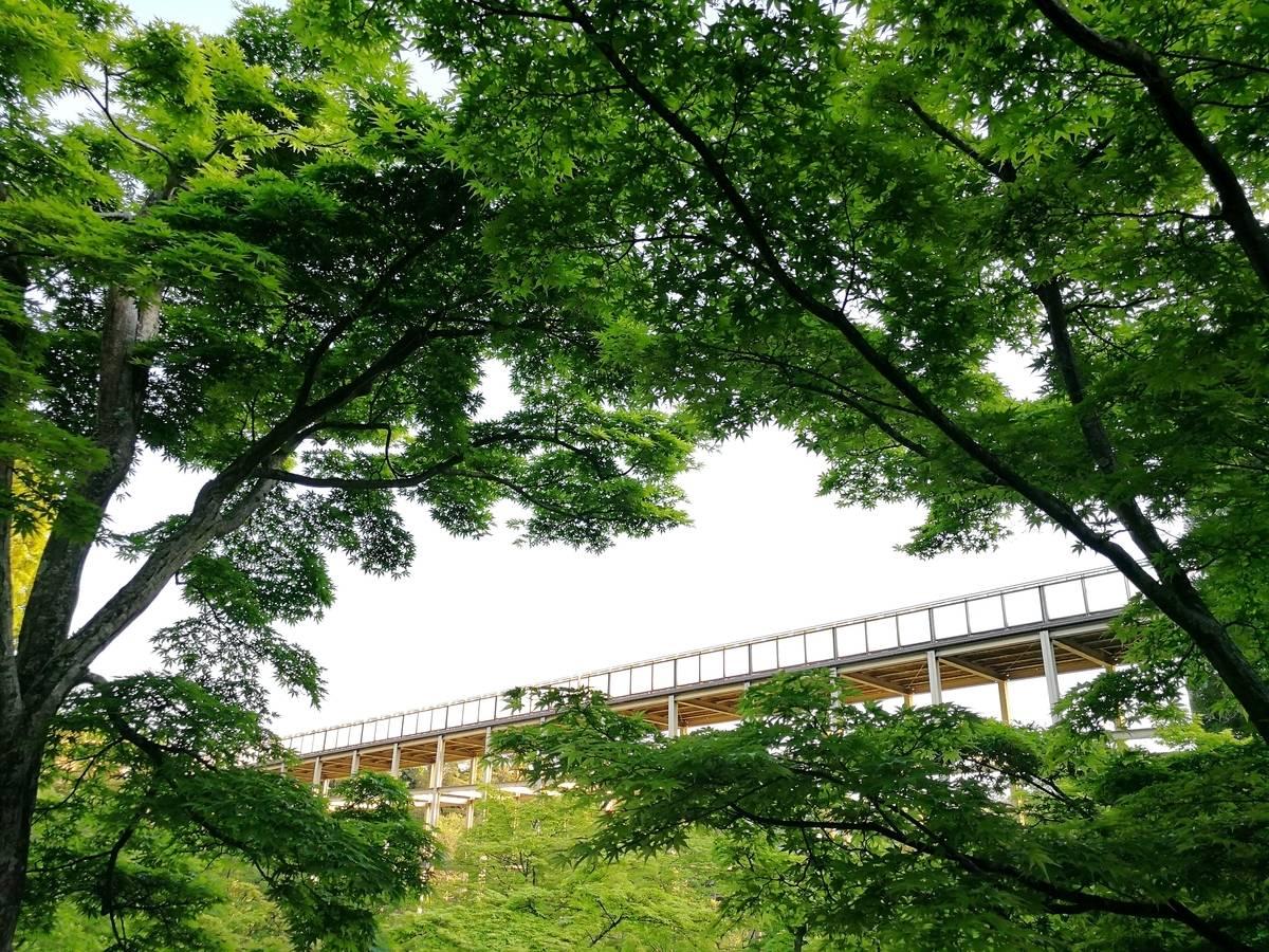 用五感體驗新綠季節的森林浴!一起到京都的「京阪奈紀念公園」散散步吧♪