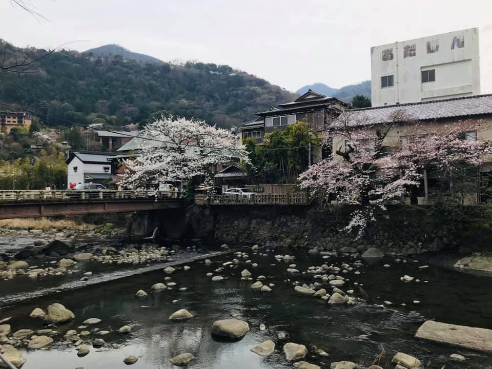 現在正逢櫻花季