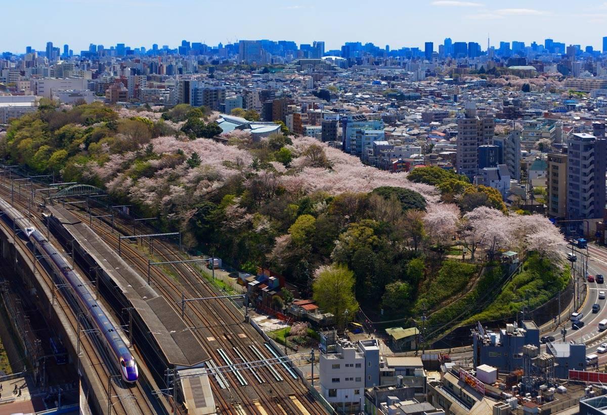 橫跨王子站和道路交會內側,有櫻花出現的地方即是飛鳥山公園。