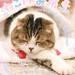 貓咪休假展 冬 2019特設網站