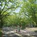 【早上景點】利用早晨出門觀光兼運動,東京人氣運動景點看這裡|Cue日本 ~讓你的生活變得更有意義~