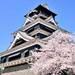 油菜花與櫻花等你來!冬天到九州賞櫻不怕沒花看【暢遊日本APP】|Cue日本 ~讓你的生活變得更有意義~
