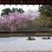 好美!京都賞櫻到處都好拍 經典櫻景你看了幾個?|Cue日本 ~讓你的生活變得更有意義~
