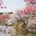 甲信越在哪裡?東京之外的關東近郊賞櫻處總整理|Cue日本 ~讓你的生活變得更有意義~