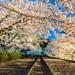 【京都】櫻花季系列3~不用再排嵐山小火車 蹴上傾斜鐵道賞櫻花超好拍