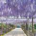 曼陀羅寺公園 | 【公式】愛知・名古屋の公式観光ガイド AICHI NOW~旬のイベント・観光情報~