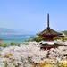 山陰山陽+四國美麗櫻花這裡找 廣島嚴島神社春景更迷人