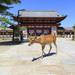 到奈良找小鹿班比 參觀東大寺|Cue日本 ~讓你的生活變得更有意義~