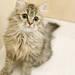 親近貓咪!貓咖啡『Moff animal cafe』六月將在成田開幕