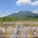 從群馬進初夏尾瀨國立公園健行筆記 邂逅水芭蕉與山荷葉