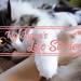 在日本如何養寵物—我和貓咪的幸福生活