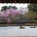 好美!京都賞櫻到處都好拍 經典櫻景你看了幾個?