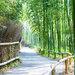 【京都嵐山】日本唯一一所保佑健康的神社「御髮神社」 帶你慢步京都竹林小路