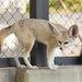 關西親子自由行必去景點!到「京都市動物園」與小動物零距離接觸