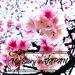 敞洋在日本最早開的粉紅河津櫻花海中!熱海櫻系川櫻花祭、熱海梅園一日遊