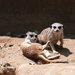 和小動物零距離一起散步!野生動物園「姬路中央公園」