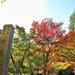 【京都私房景點】「神藏寺」400年樹齡大楓樹 來尋找隱世紅葉庭園吧