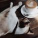 在福岡的貓咪咖啡館認識一些蓬鬆的朋友吧!