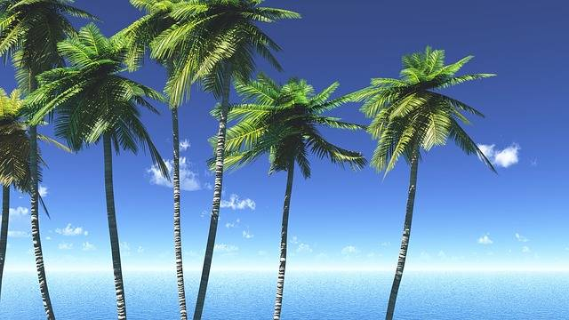 Sea Sky Leaf - Free image on Pixabay (2789)
