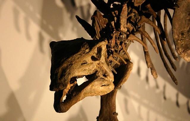 生物史を一新した化石ハンター、メアリー・アニング