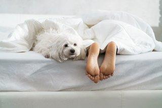 寝る前に避けたい、眠りを妨げる夜の意外な習慣